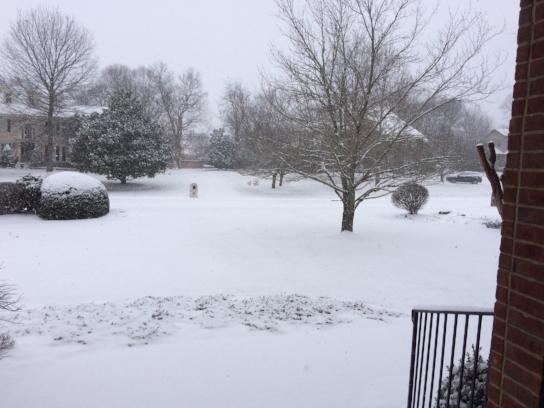 snow 1-16-18.JPG