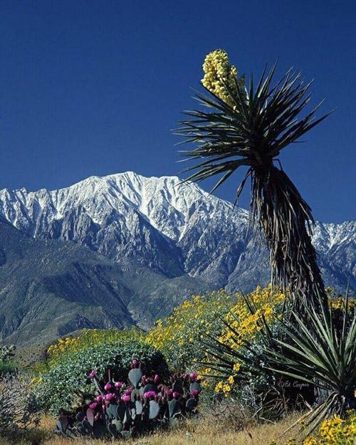 ForWeb_MountainsNearPalmSprings_500x.jpg