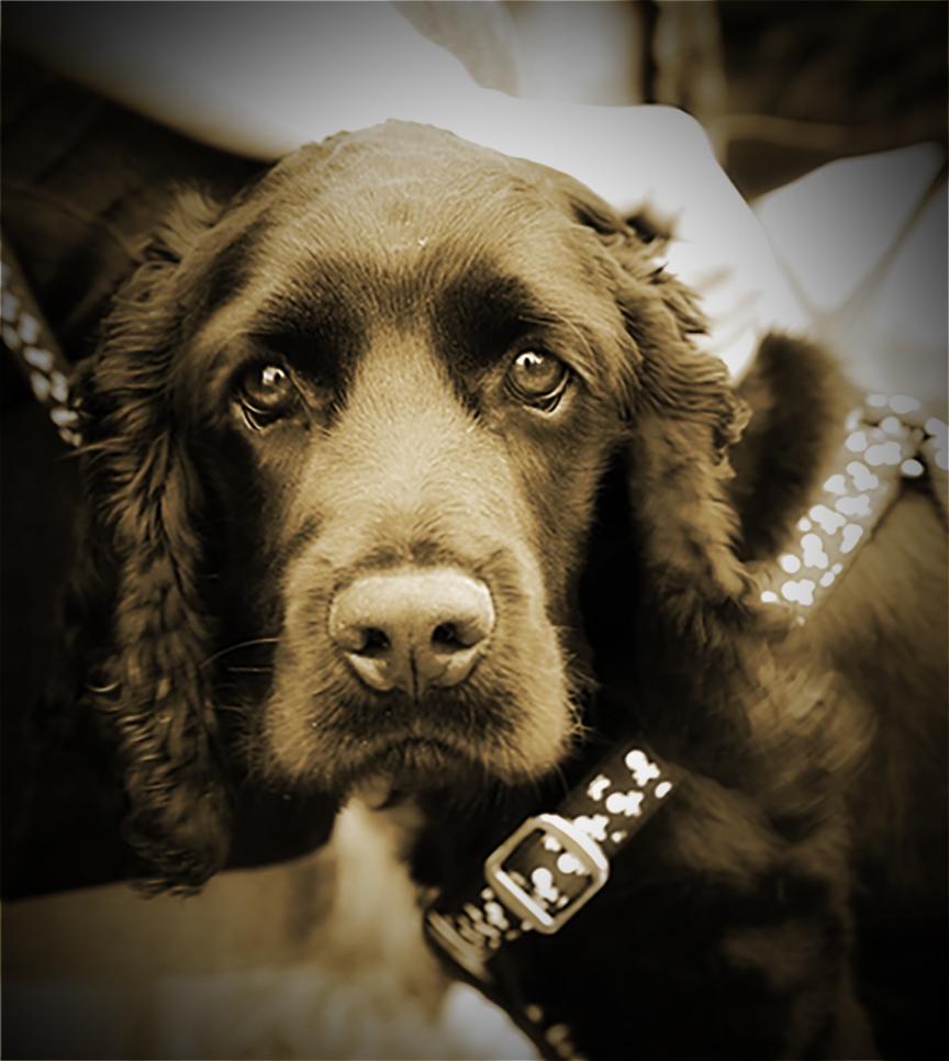 BlackdogvintagWEBSITE.jpg