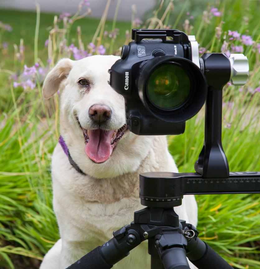 traceu-kuhlin-pet-photography-pasadean-ca-faq