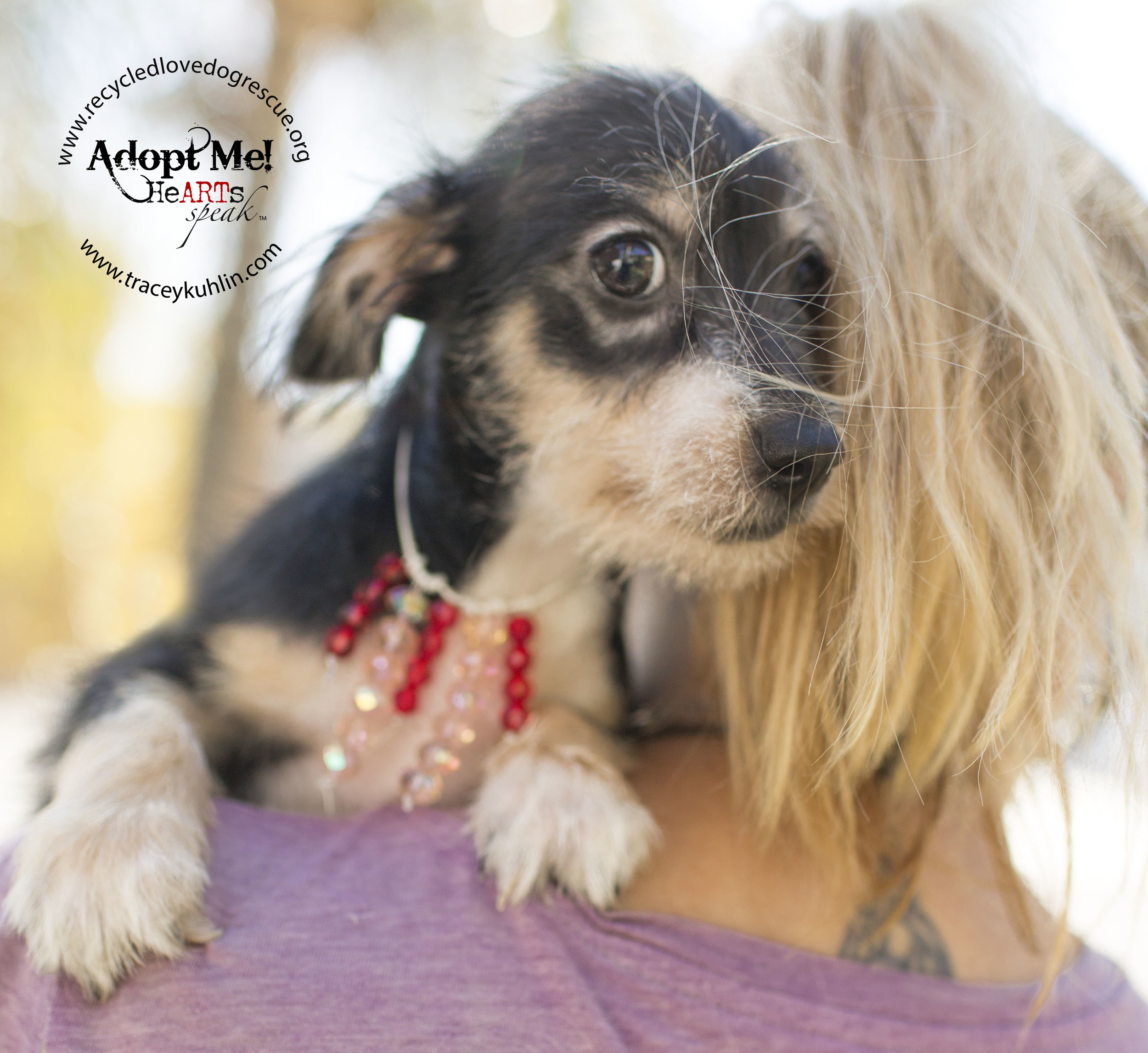 Rescue puppy at Recycled Love Dog Rescue in Corona, California