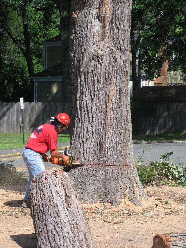 blk-parking-lot-tree-8.jpg