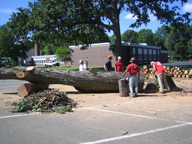 blk-parking-lot-tree-12.jpg