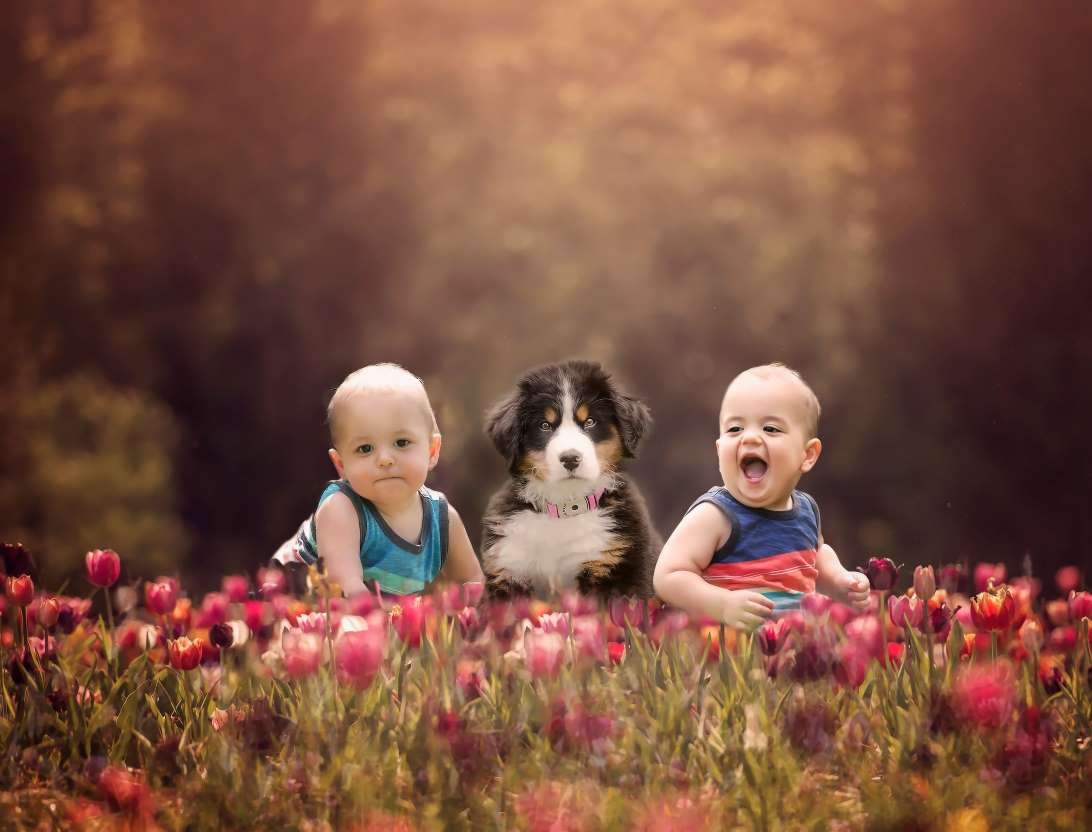 MSN - Adorable Photos of Dogs and Puppies With Babies(there are a few of Mack and Birdie if you flip through. These are my favorite.)