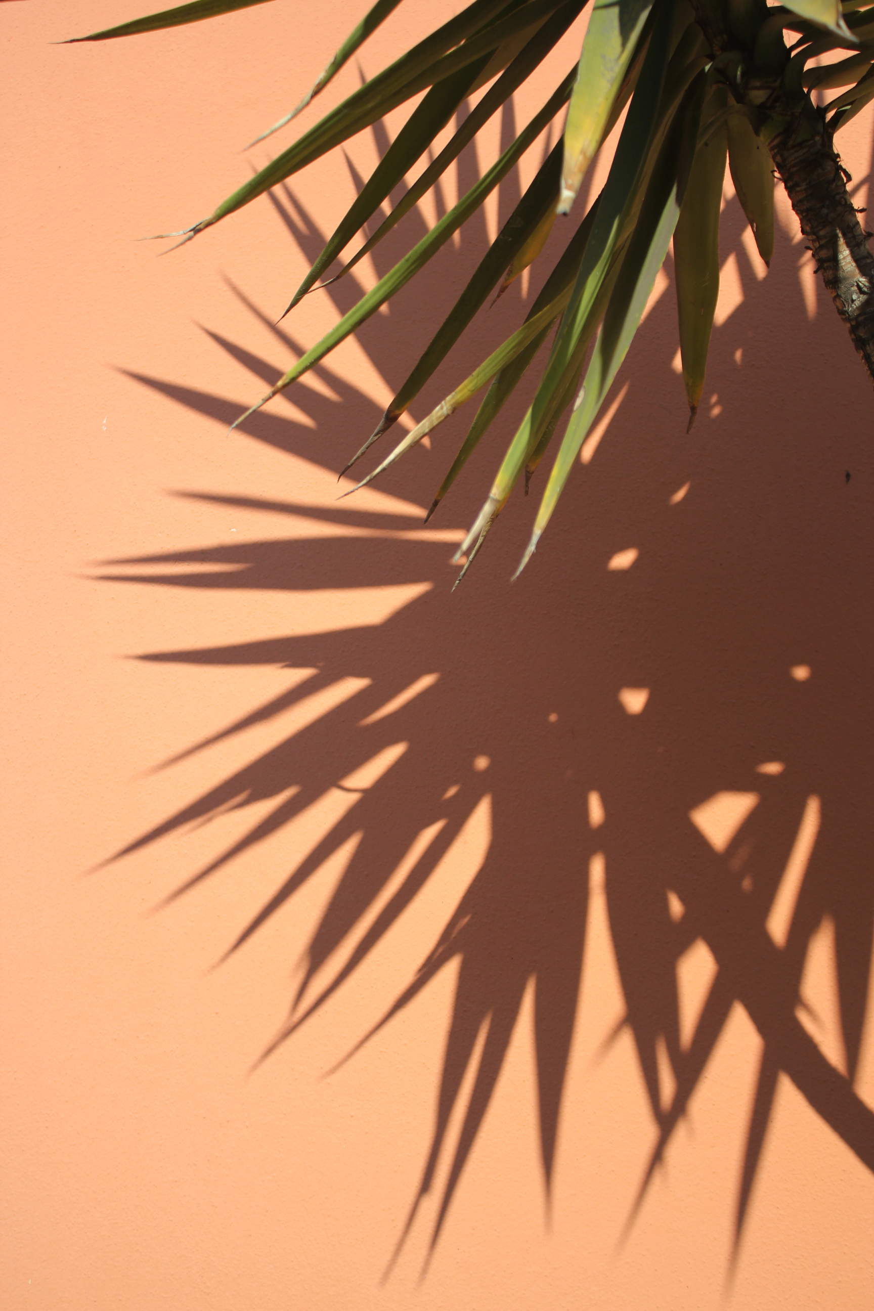 Cremona Italy Plant Leaves Sunlight Orange
