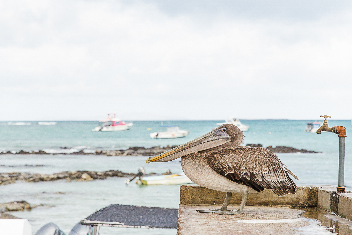 Galapagos Islands // Image by Melissa Hope