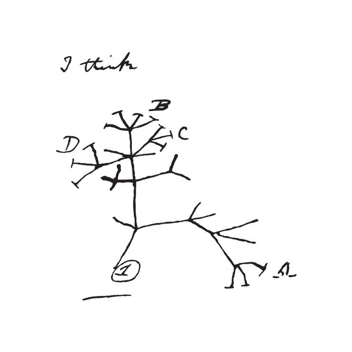 litographs-darwin-design.jpg
