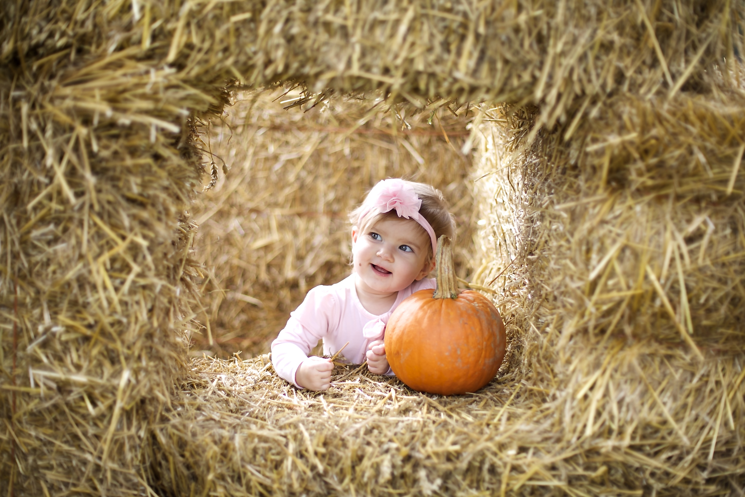 pumpkin patch 15