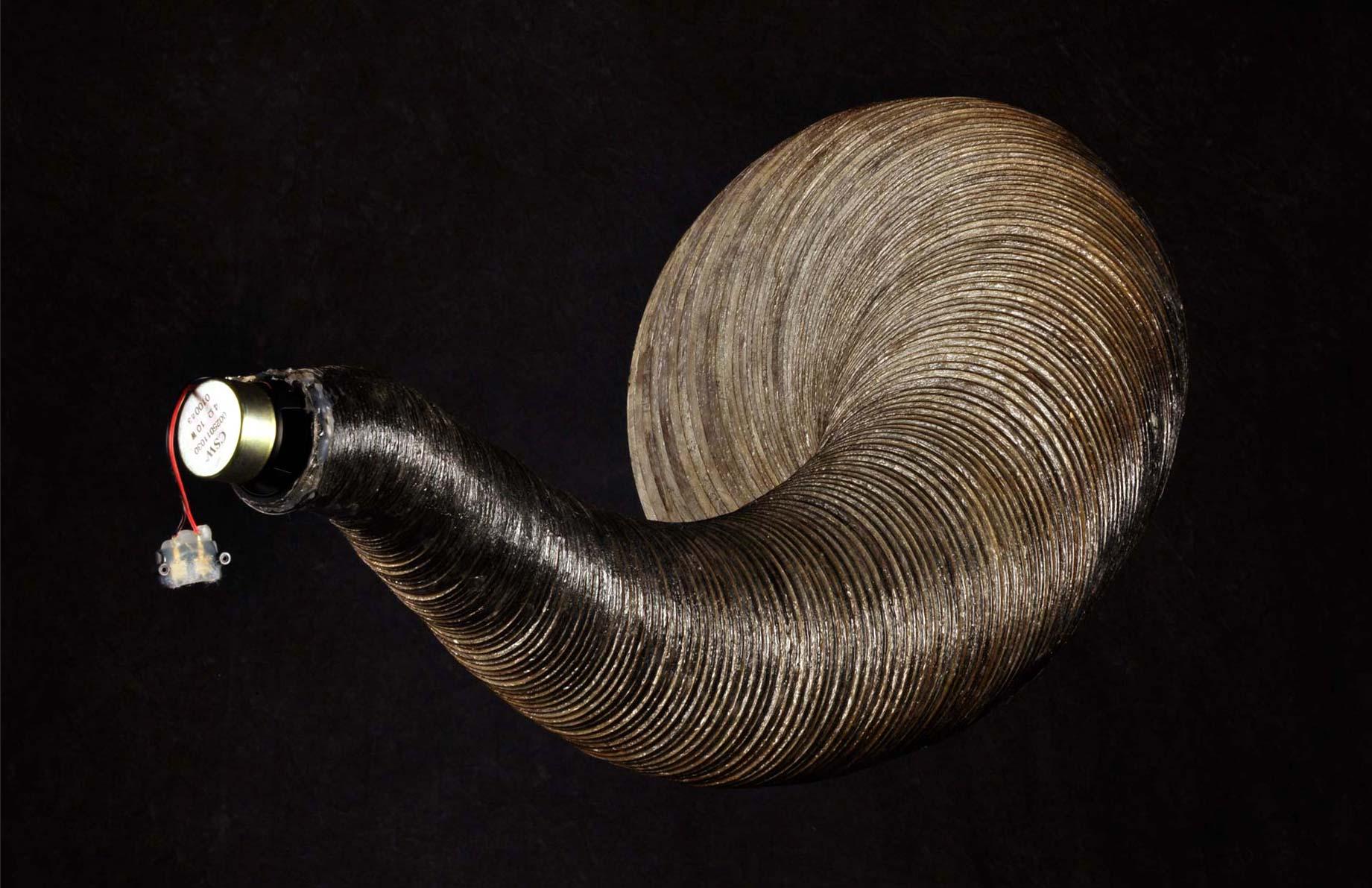 paulapart.spire.seashell.horn.shell.speaker.sound.soundshell.acoustic.acoustics2.jpg