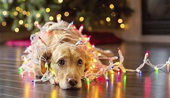 holiday-stress-post.jpg