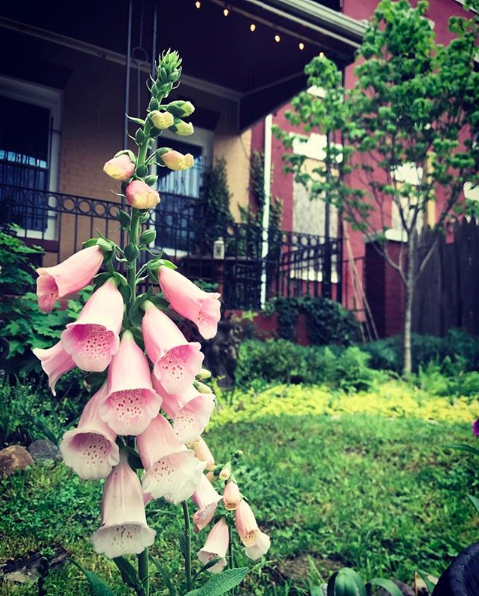 A Casey Tree planted in the garden of Pointless' Co-Artistic Director &  Rite of Spring  Director Matt Reckeweg.