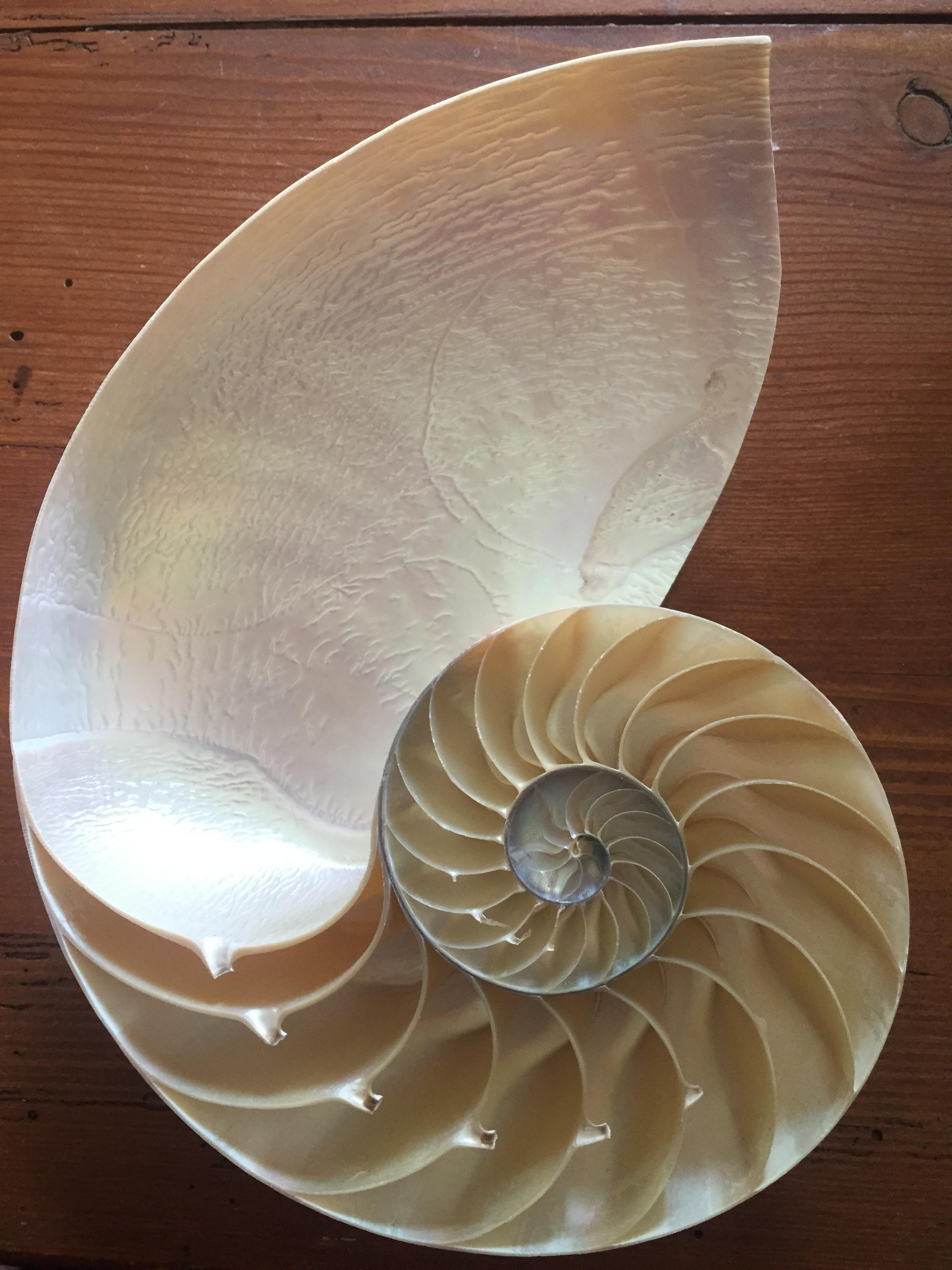 Shell Spiral.JPG