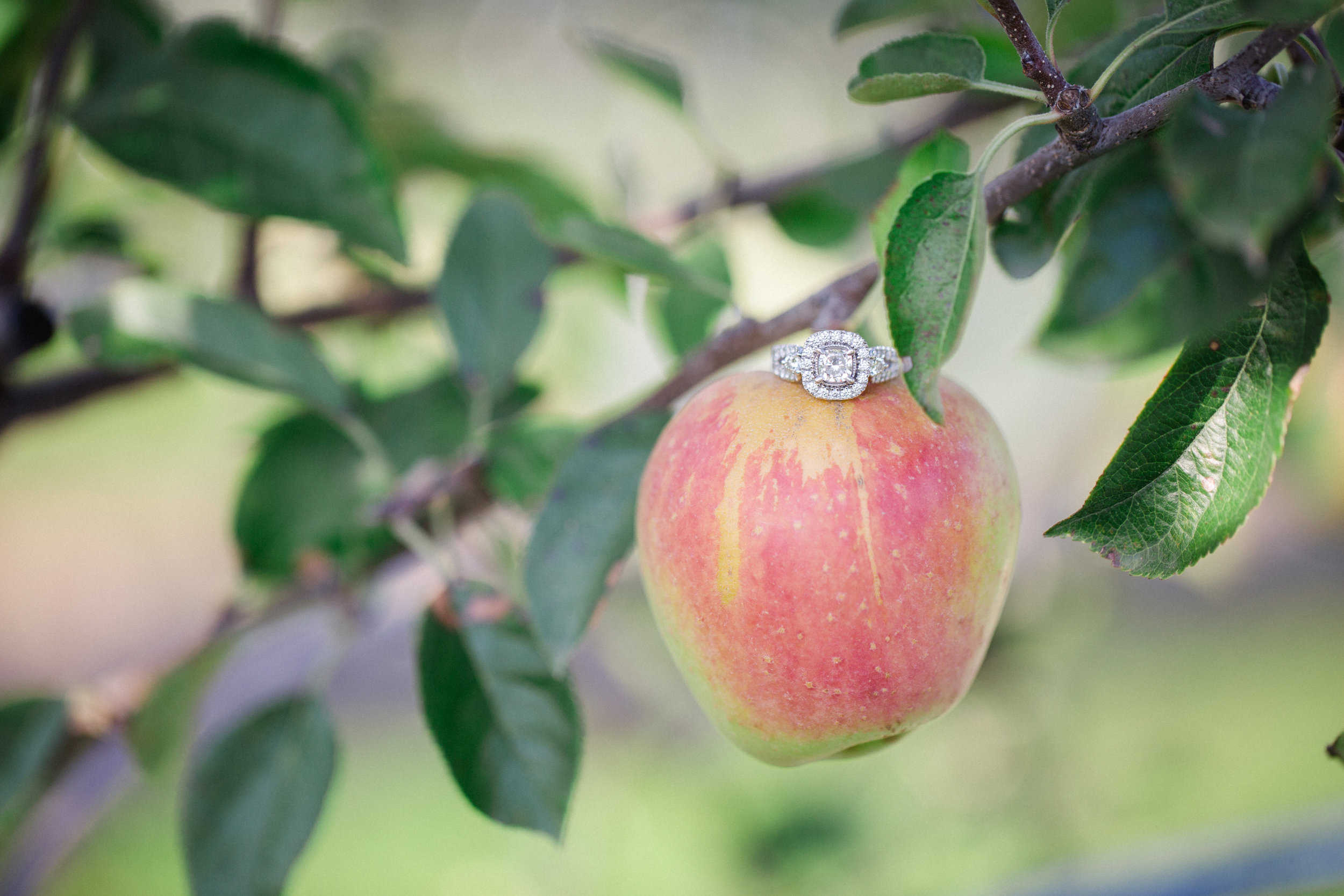 Scranton PA Wedding Photographers Fall Engagement Session Roba's Apple Orchard_JDP-1726.jpg