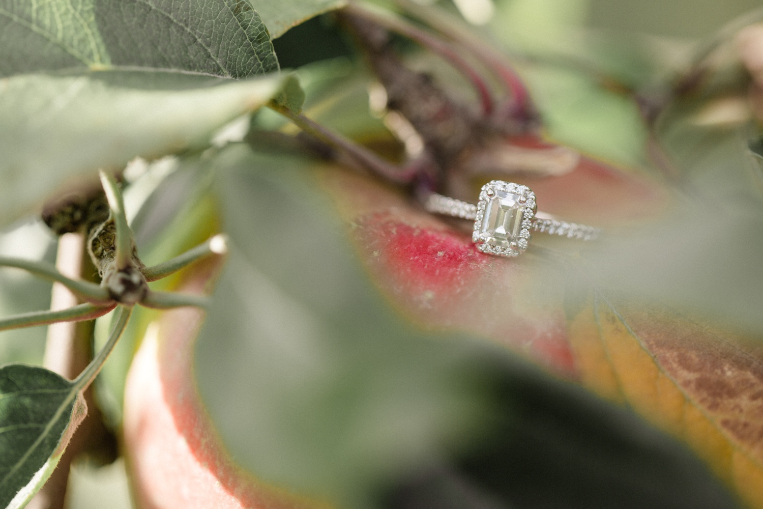 Roba's Apple Orchard Engagement Session_0010.jpg