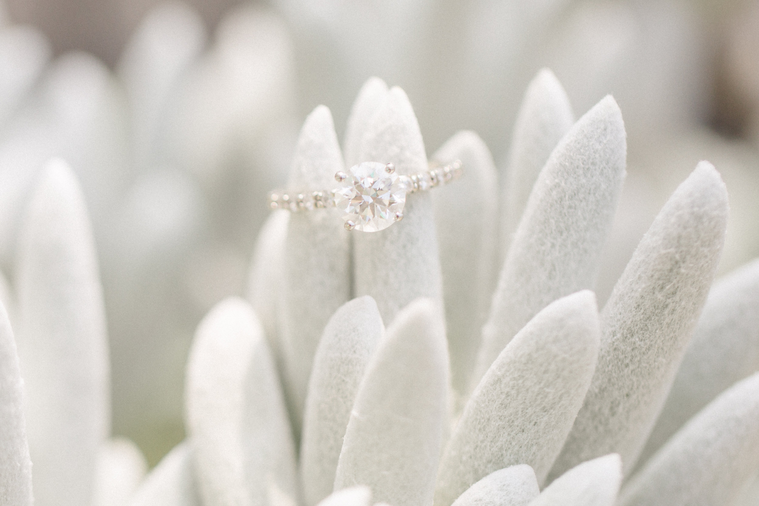 Longwood Gardens Engagement Session Photos_JDP-62.jpg