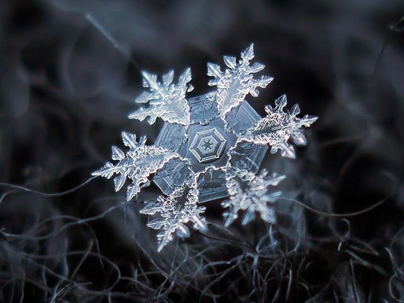 macro-photography-snowflakes-alexey-kljatov-18.jpg