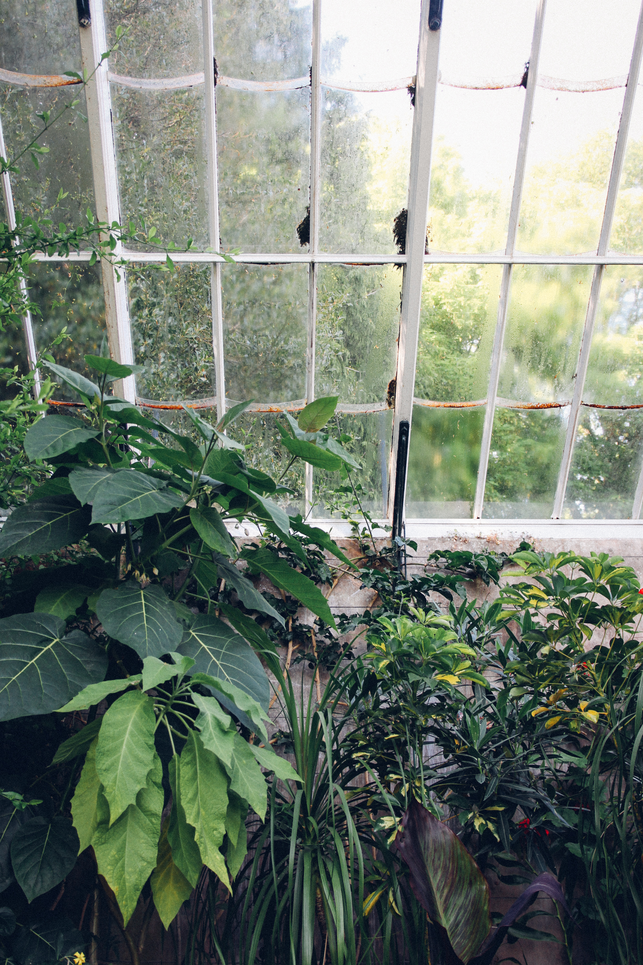 Wallington gardens - greenhouse | carolyn carter