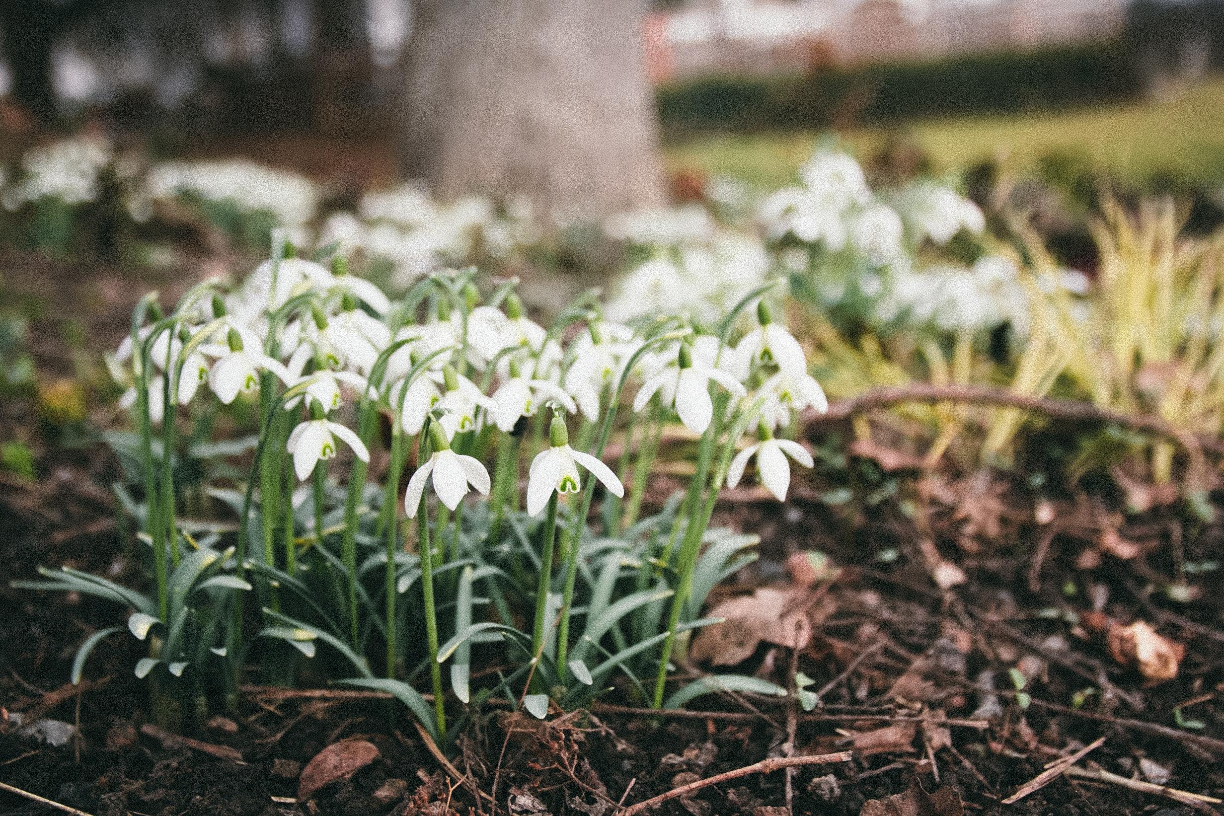 February photos | carolyn carter blog