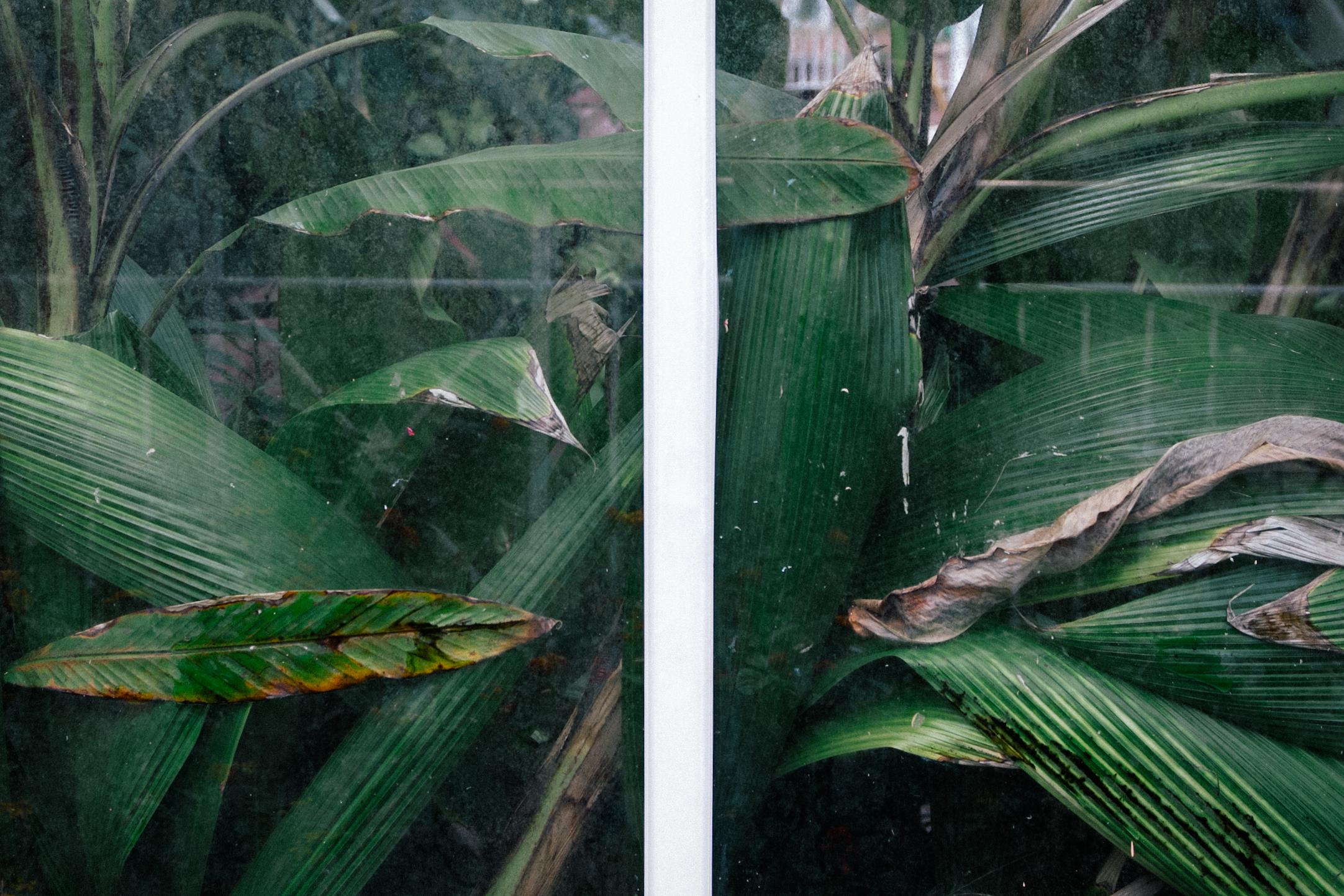 Birmingham Botanical Gardens | carolyn carter blog