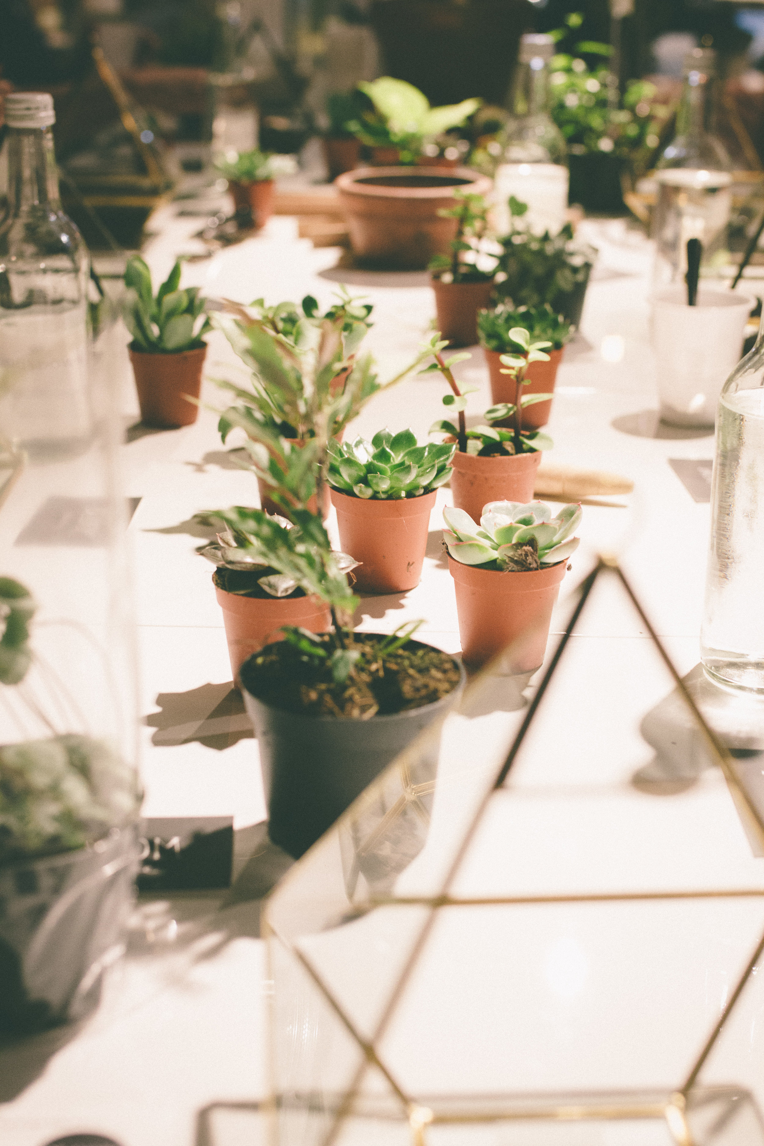 Terrarium Workshop - Bloom Collective | Carolyn Carter Blog