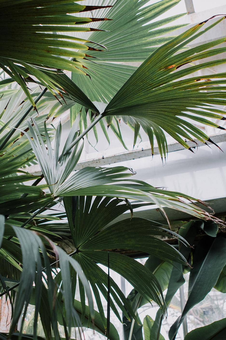 Birmingham Botanical Gardens - Carolyn Carter photography