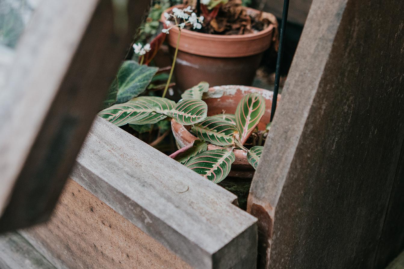 Birmingham Botanical Gardens _ Carolyn Carter Photography