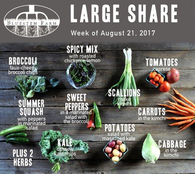 Large Vegetable Share, Week 11 of Summer 2017