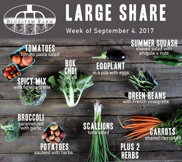 Week 13 Large Share