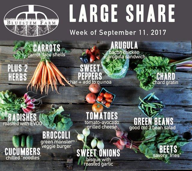 Large Vegetable Share - CSA Week 14