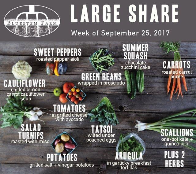 Summer Share - Week 16 - Large