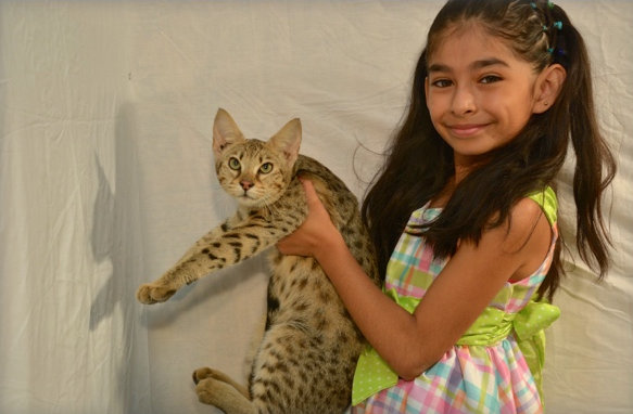 Peggy, one of our parent Savannah cats