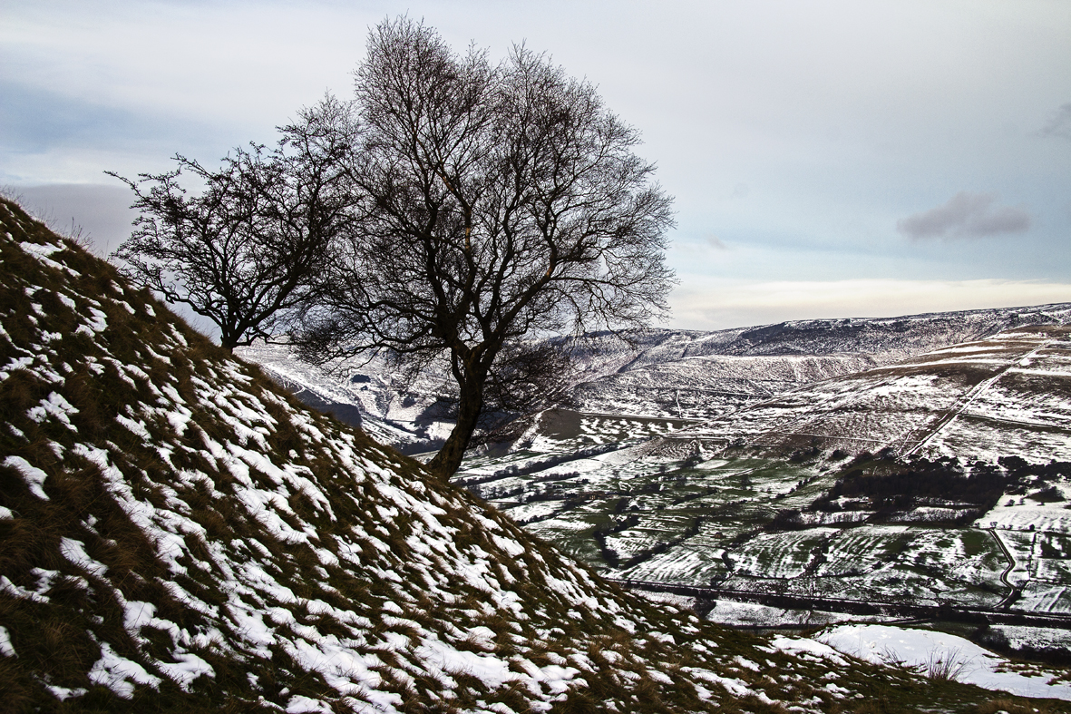 Mam Tor - two trees