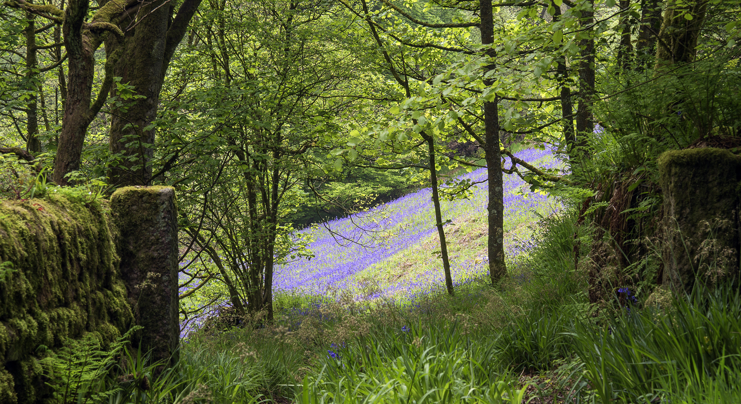 Track to Bluebell field
