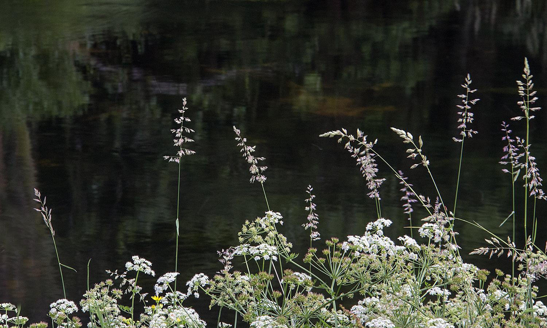 Elterwater flowers