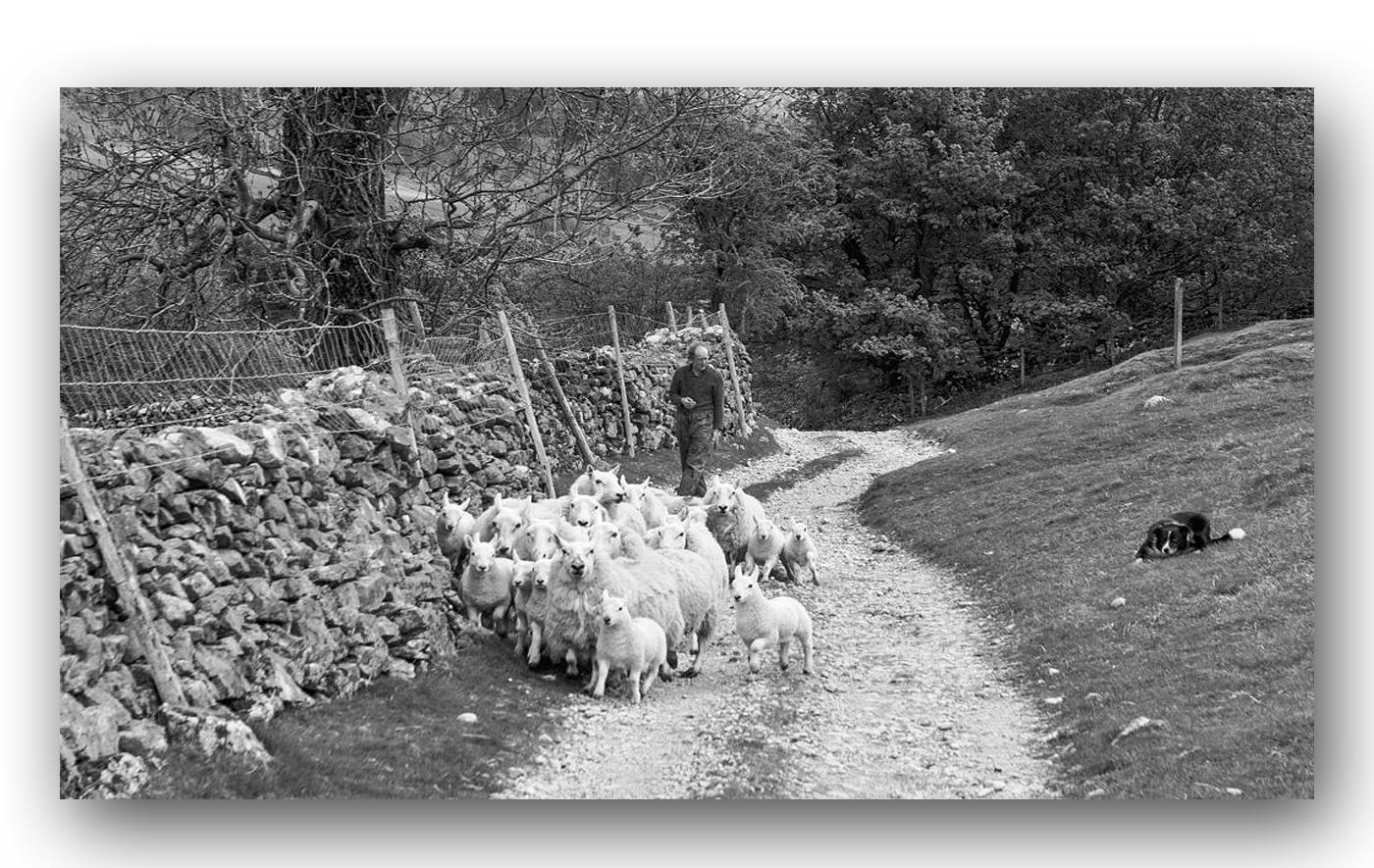 The Shepherd, Kettlewell