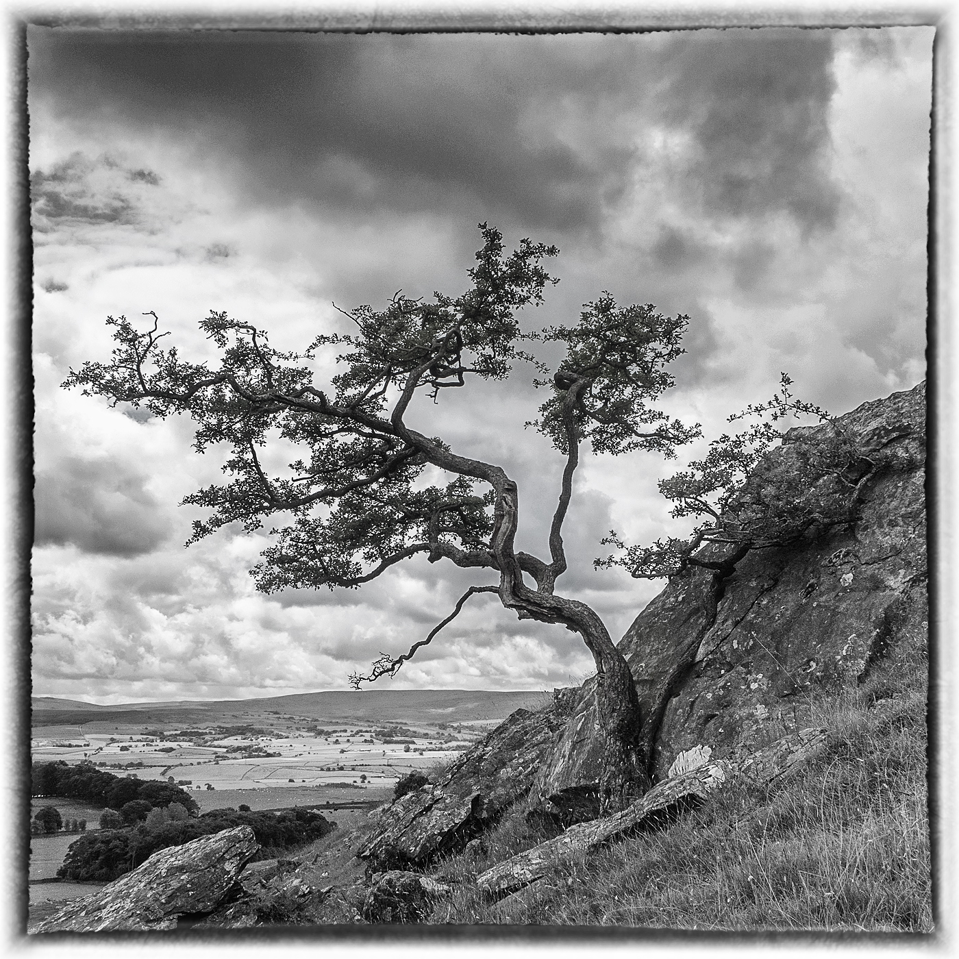 Lone Tree at Norber Erratics