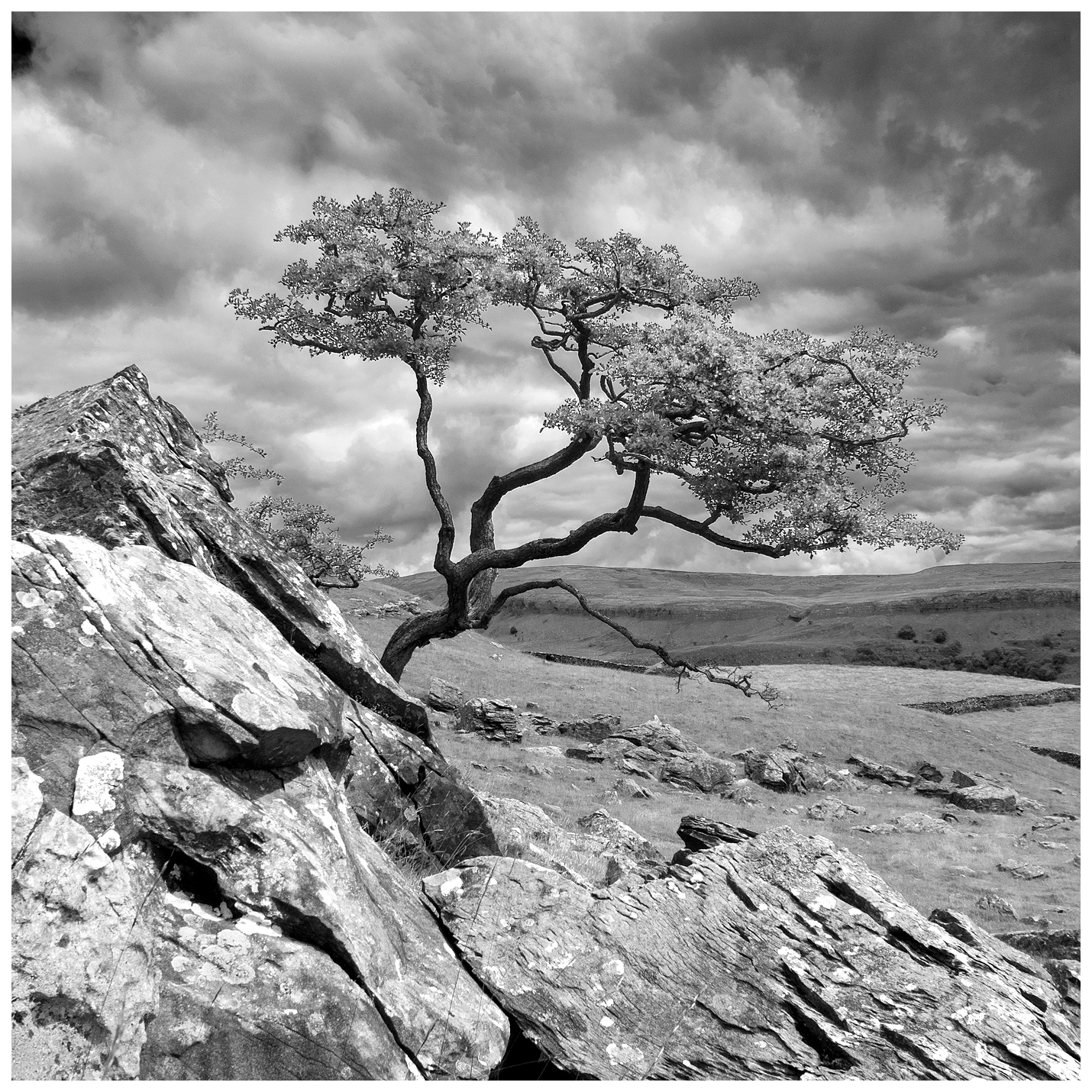 Lone Tree 2 at Norber Erratics