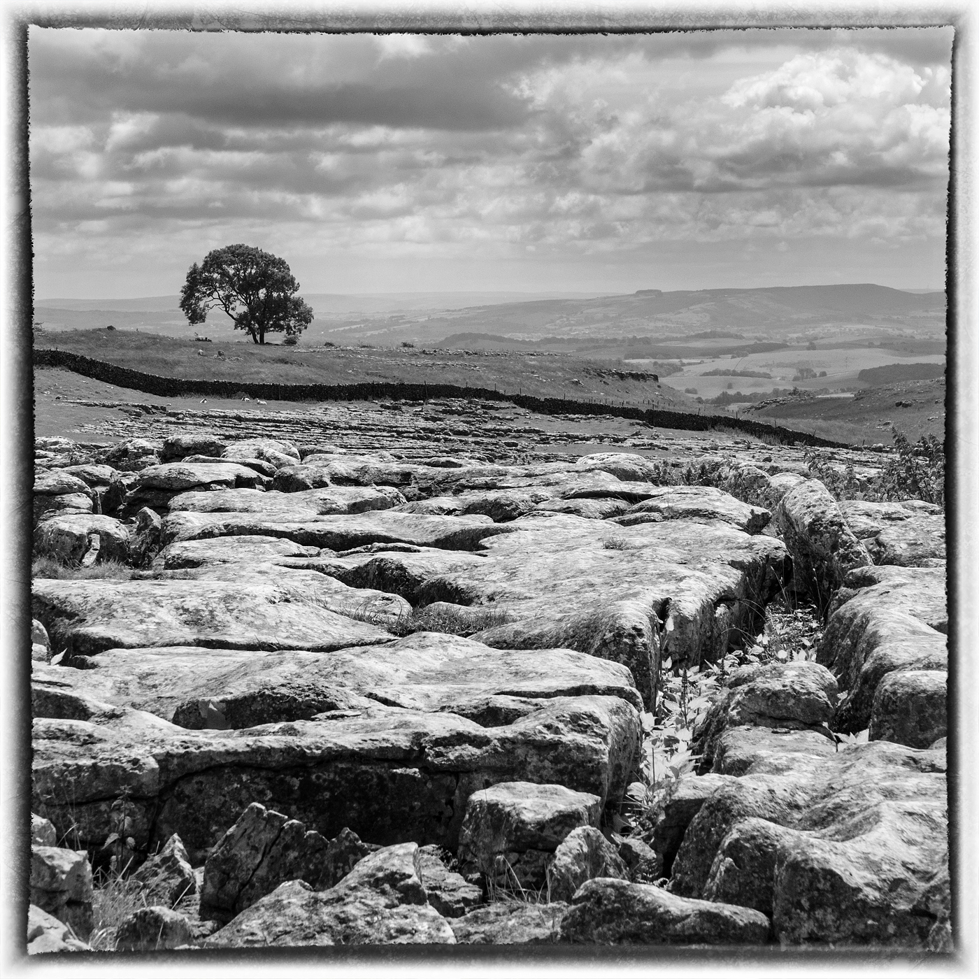 Limestone Pavement above Malham
