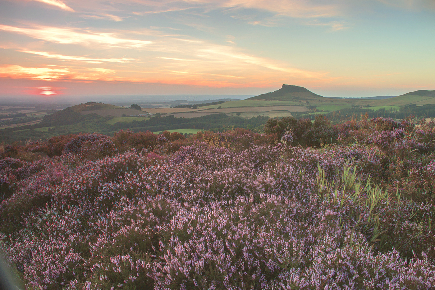 Heather near Roseberry Topping