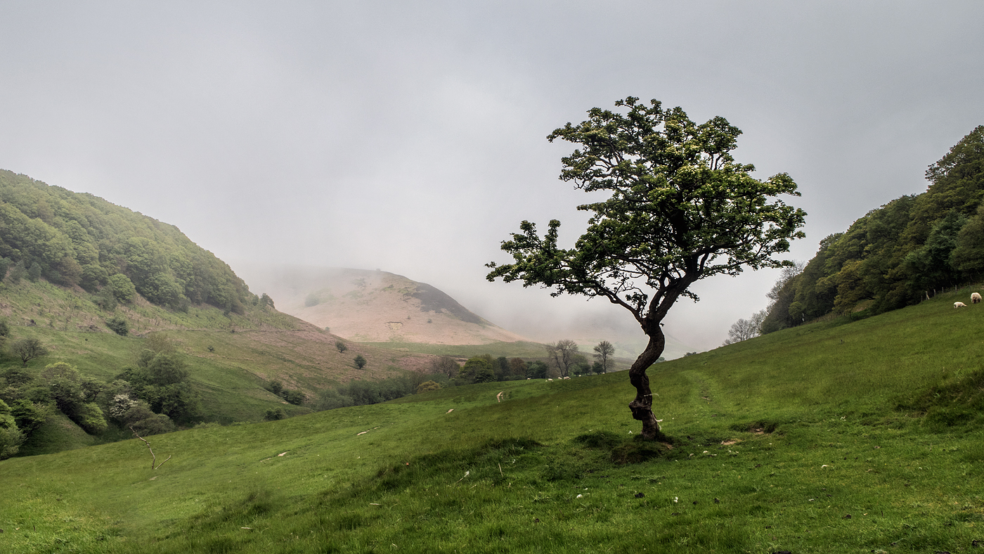 Lone Tree at Hole of Horcum