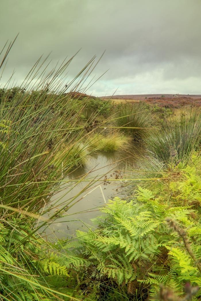 Hutton Ridge pond