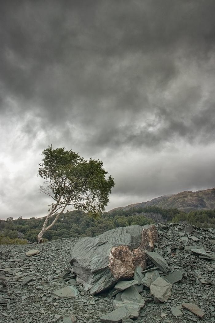 Hodge Close Quarry Tree