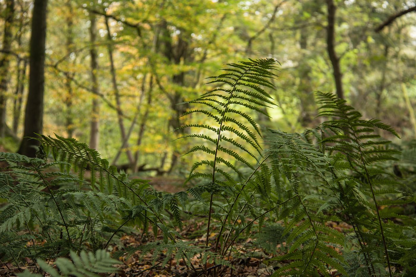 Dufton Ghyll Wood