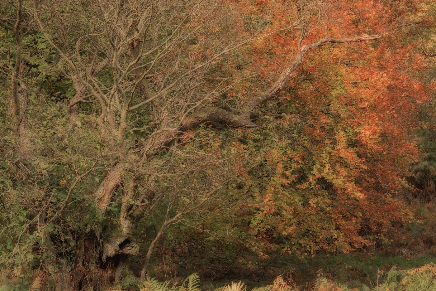 Ullswater colours