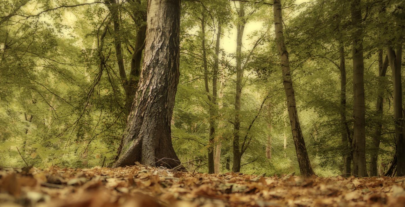Hagg Wood