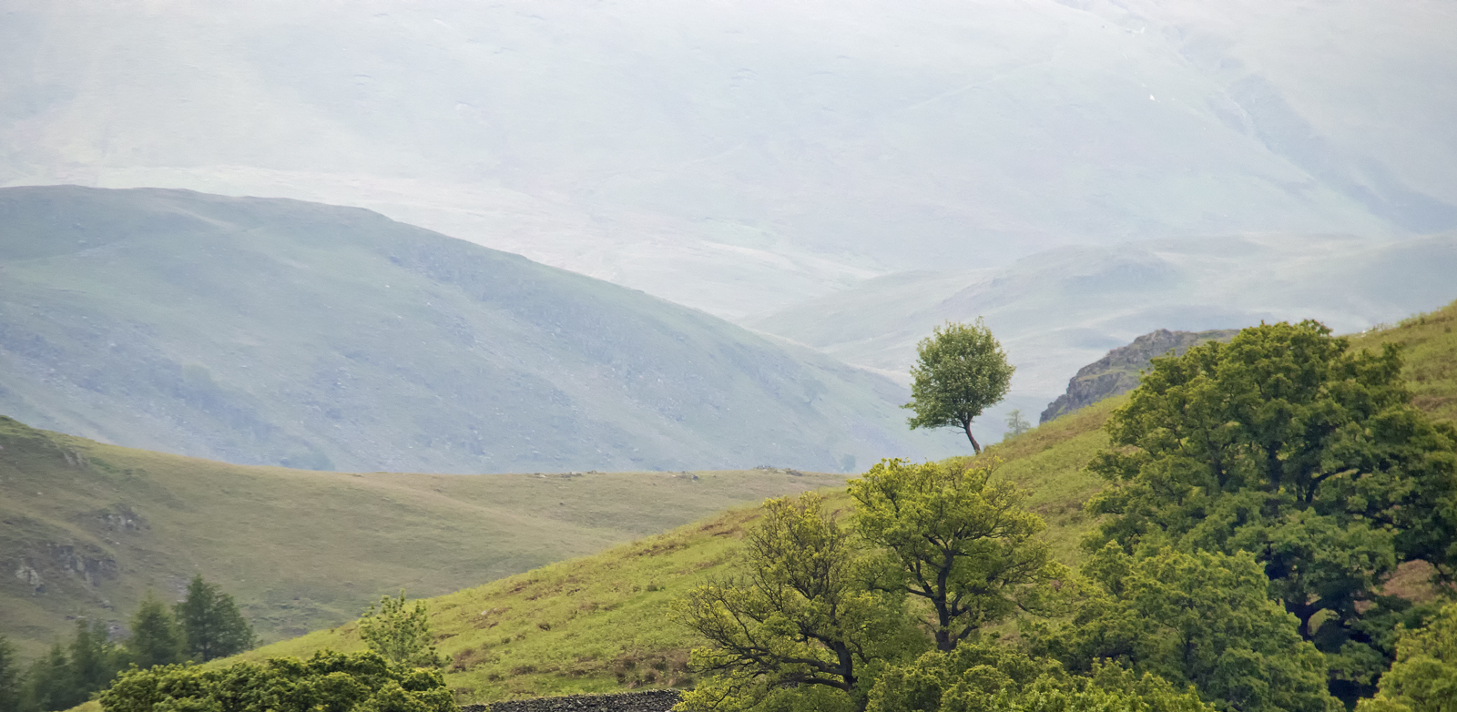 Ullswater little tree