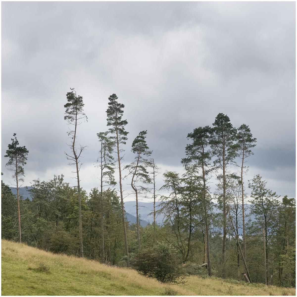 Tarn Hows Trees