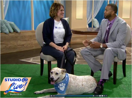 "Danielle Martin, Executive Director of Frankie's Friends charitable pet foundation interviewed on WTSP for Seminole Heights fundraiser, ""The Pup Crawl."""