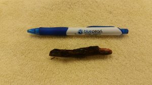 This stick was inside Cuddy's neck for nearly half a year.
