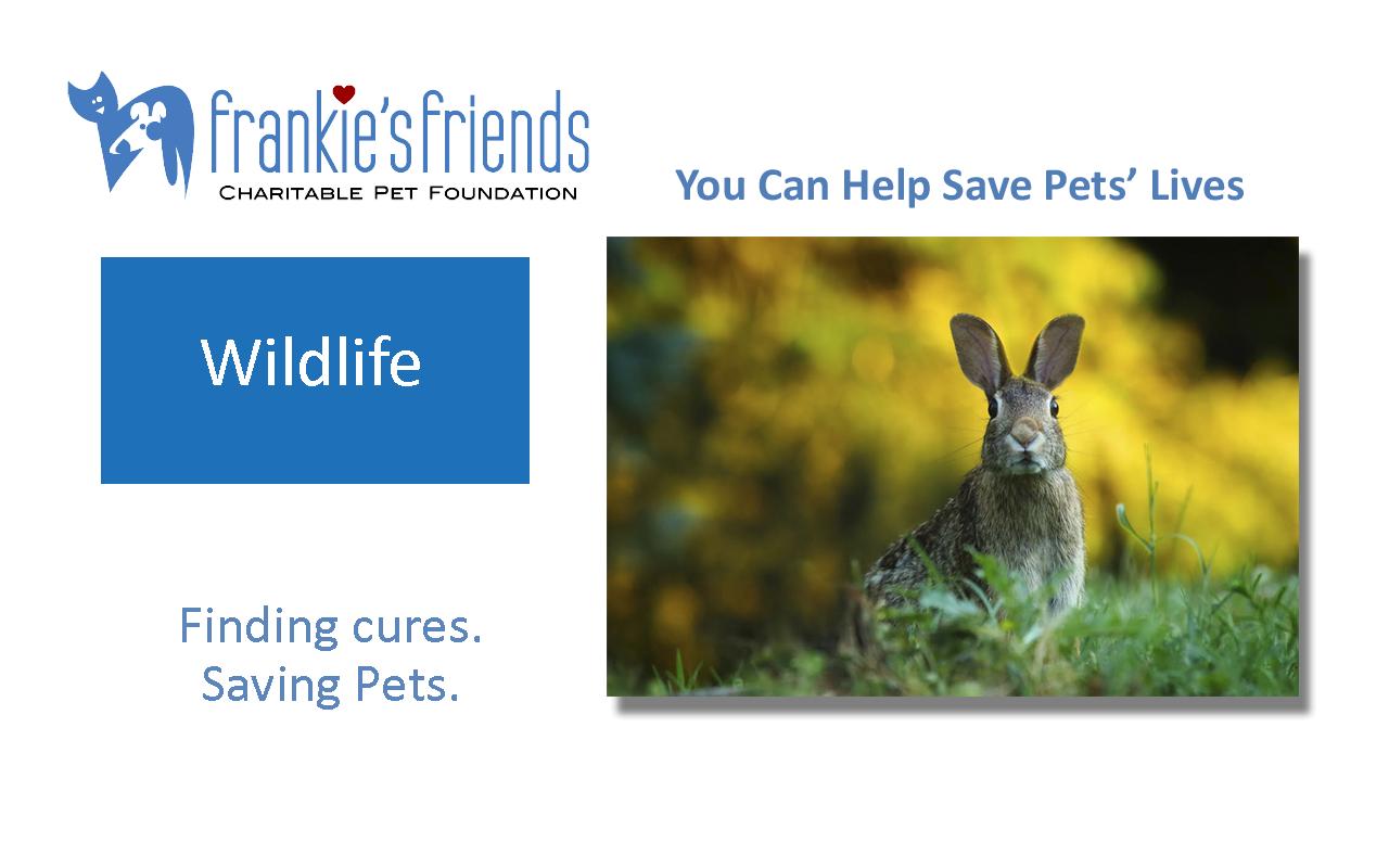 Wildlife Banner_Kindness.png